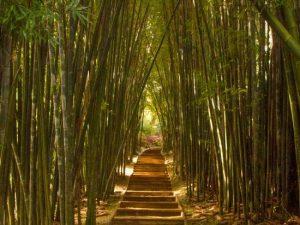 the-bamboo-walk